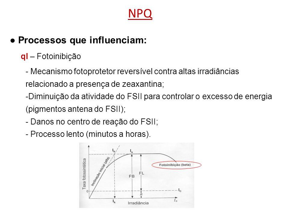 NPQ Processos que influenciam: - Mecanismo fotoprotetor reversível contra altas irradiâncias relacionado a presença de zeaxantina; -Diminuição da ativ