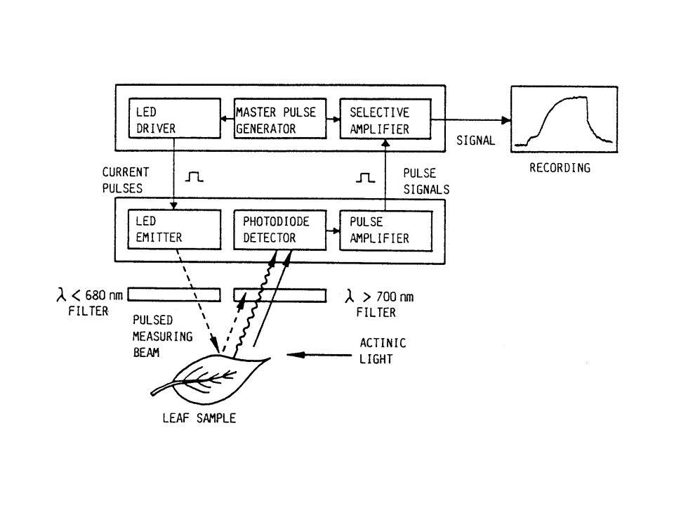 Necessidade de ajuste dos parâmetros de iluminação às características do modelo investigado – Intensidade da luz basal – Ganho – Intensidade do pulso saturante – Tempo de aplicação do pulso saturante – Outros Condições para uma Boa Análise