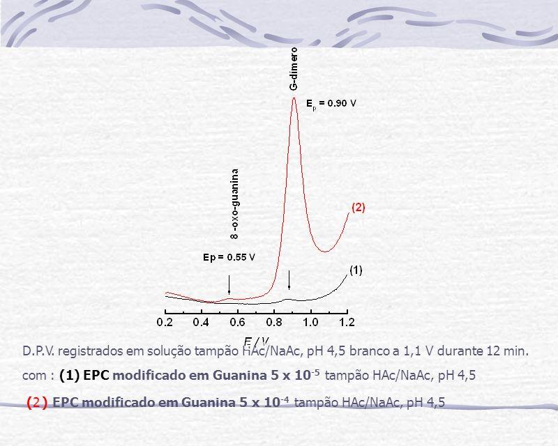 D.P.V. registrados em solução tampão HAc/NaAc, pH 4,5 branco a 1,1 V durante 12 min. com : (1) EPC modificado em Guanina 5 x 10 -5 tampão HAc/NaAc, pH