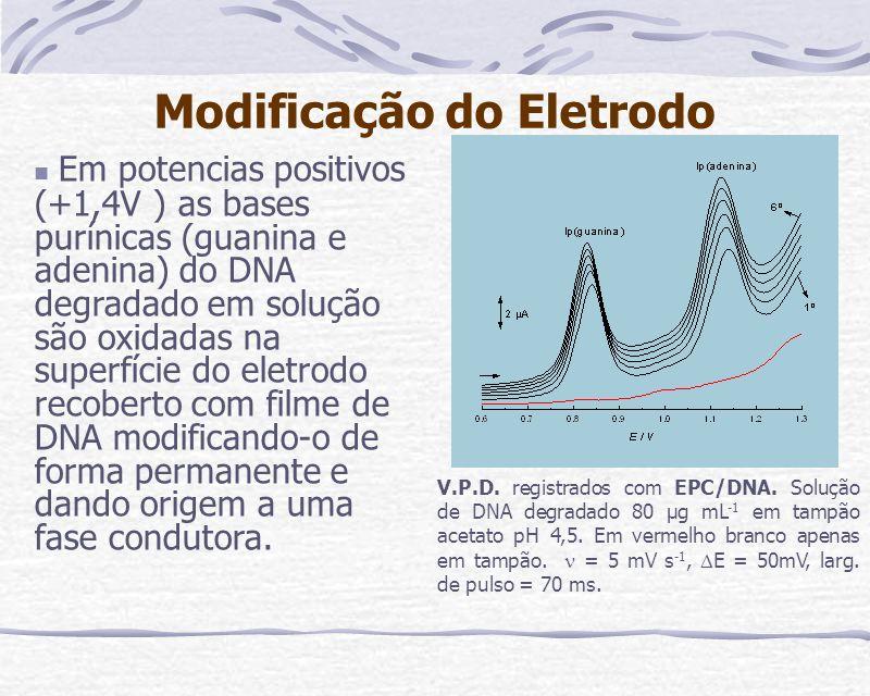 Modificação do Eletrodo Em potencias positivos (+1,4V ) as bases purínicas (guanina e adenina) do DNA degradado em solução são oxidadas na superfície