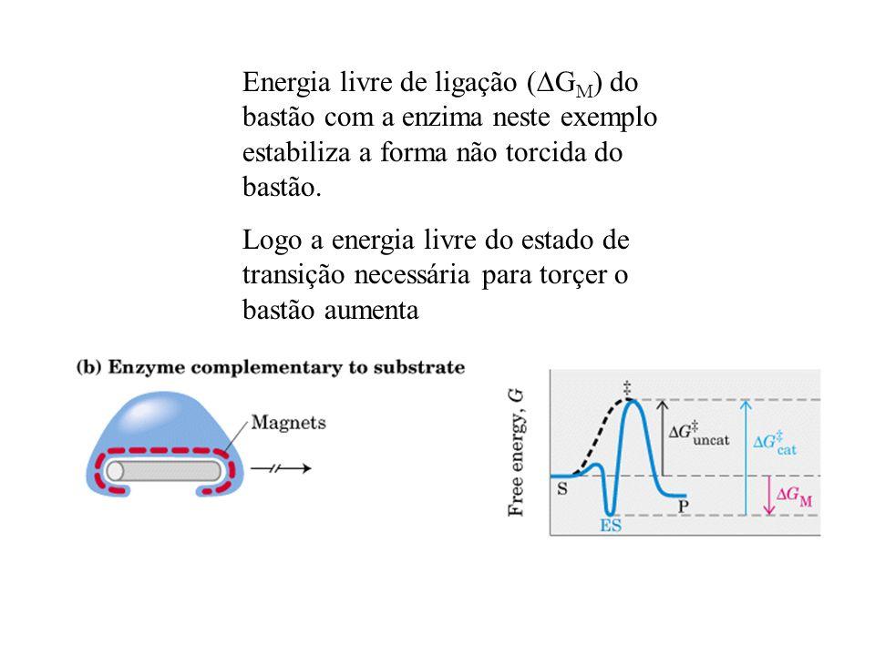 Energia livre de ligação ( G M ) do bastão com a enzima neste exemplo estabiliza a forma não torcida do bastão. Logo a energia livre do estado de tran