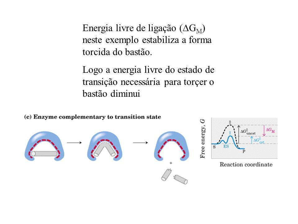 Energia livre de ligação ( G M ) neste exemplo estabiliza a forma torcida do bastão. Logo a energia livre do estado de transição necessária para torçe