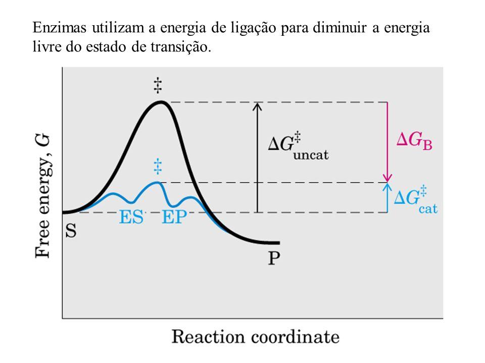 Enzimas utilizam a energia de ligação para diminuir a energia livre do estado de transição.