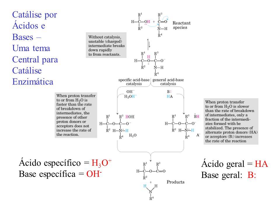 Catálise por Ácidos e Bases – Uma tema Central para Catálise Enzimática Ácido específico = H 3 O + Base específica = OH - Ácido geral = HA Base geral: