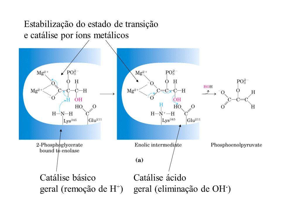 Estabilização do estado de transição e catálise por íons metálicos Catálise básico geral (remoção de H + ) Catálise ácido geral (eliminação de OH - )