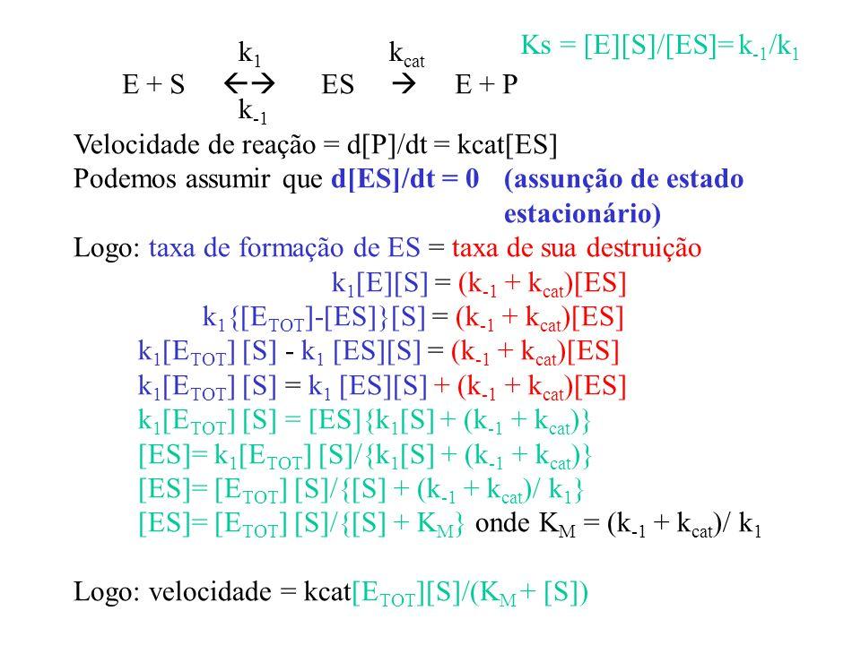 E + S ES E + P Ks = [E][S]/[ES]= k -1 /k 1 k cat Velocidade de reação = d[P]/dt = kcat[ES] Podemos assumir que d[ES]/dt = 0 (assunção de estado estaci