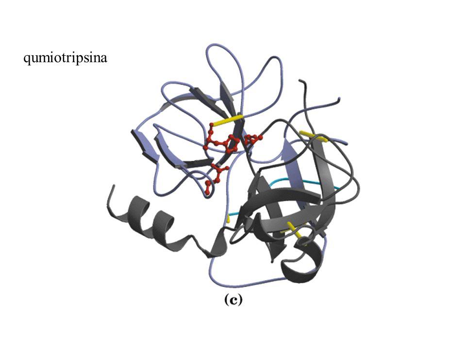 qumiotripsina
