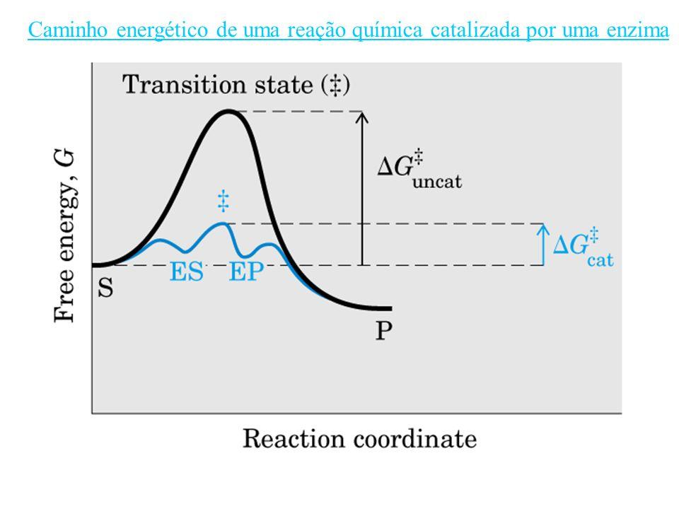 Caminho energético de uma reação química catalizada por uma enzima