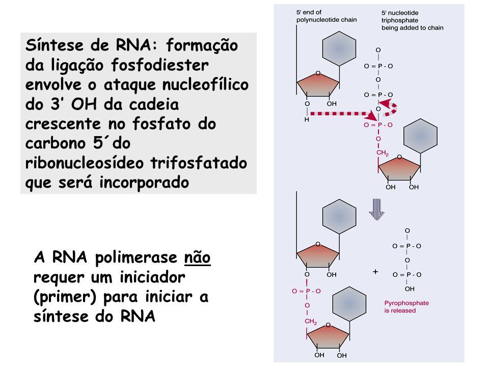Síntese de RNA: formação da ligação fosfodiester envolve o ataque nucleofílico do 3 OH da cadeia crescente no fosfato do carbono 5´do ribonucleosídeo