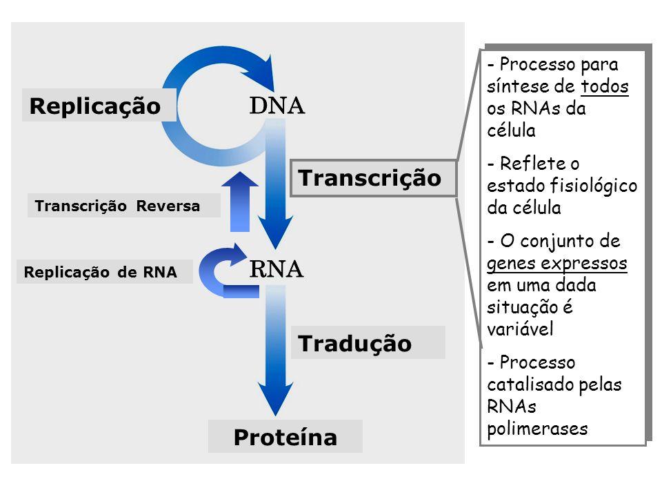 Replicação Transcrição Tradução Proteína - Processo para síntese de todos os RNAs da célula - Reflete o estado fisiológico da célula - O conjunto de g