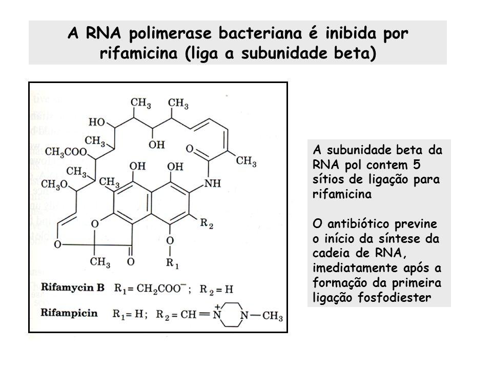 A RNA polimerase bacteriana é inibida por rifamicina (liga a subunidade beta) A subunidade beta da RNA pol contem 5 sítios de ligação para rifamicina