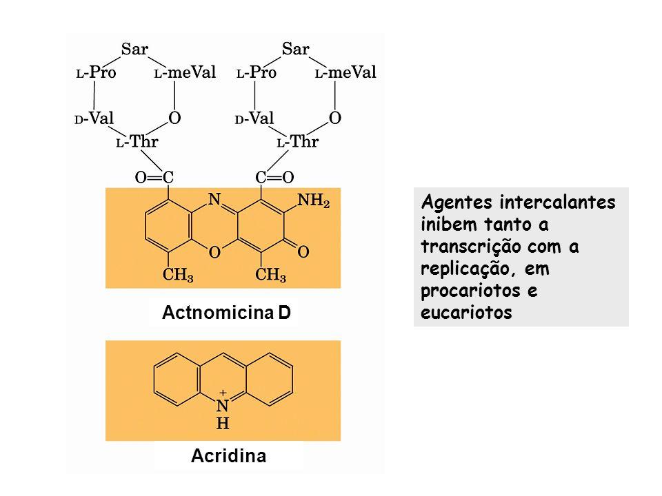 Agentes intercalantes inibem tanto a transcrição com a replicação, em procariotos e eucariotos Actnomicina D Acridina