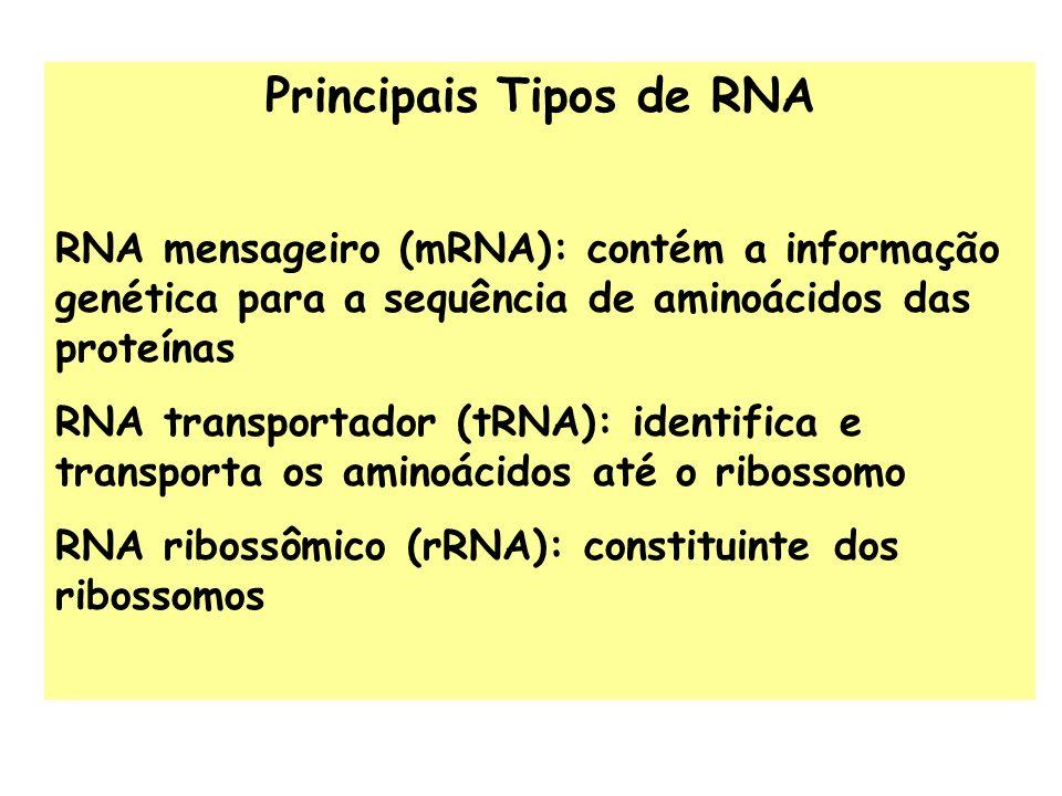 Principais Tipos de RNA RNA mensageiro (mRNA): contém a informação genética para a sequência de aminoácidos das proteínas RNA transportador (tRNA): id