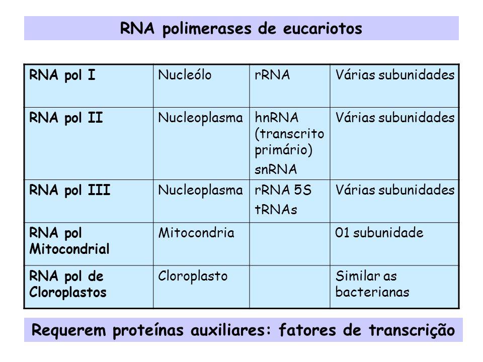 RNA polimerases de eucariotos RNA pol INucleólorRNAVárias subunidades RNA pol IINucleoplasmahnRNA (transcrito primário) snRNA Várias subunidades RNA p