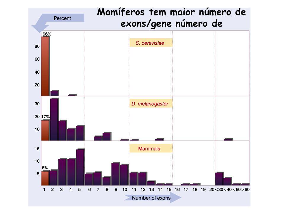 Mamíferos tem maior número de exons/gene número de
