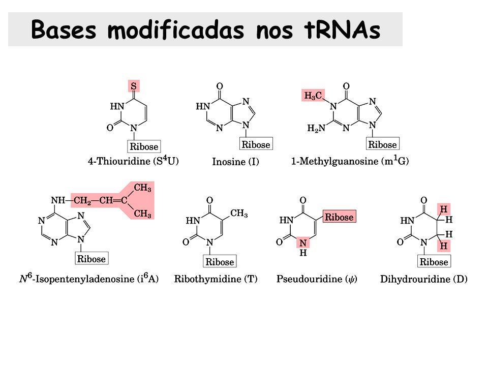 Bases modificadas nos tRNAs