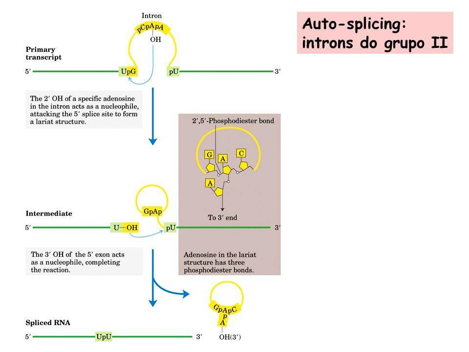 Auto-splicing: introns do grupo II