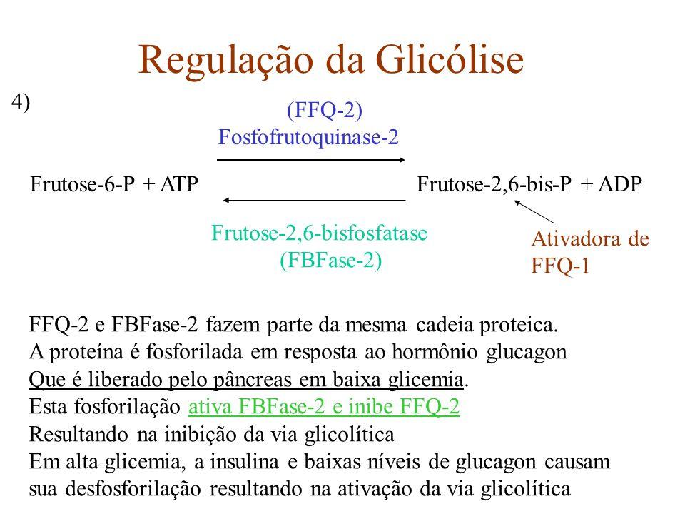 Regulação da Glicólise Frutose-6-P + ATP Frutose-2,6-bis-P + ADP (FFQ-2) Fosfofrutoquinase-2 Frutose-2,6-bisfosfatase (FBFase-2) FFQ-2 e FBFase-2 faze