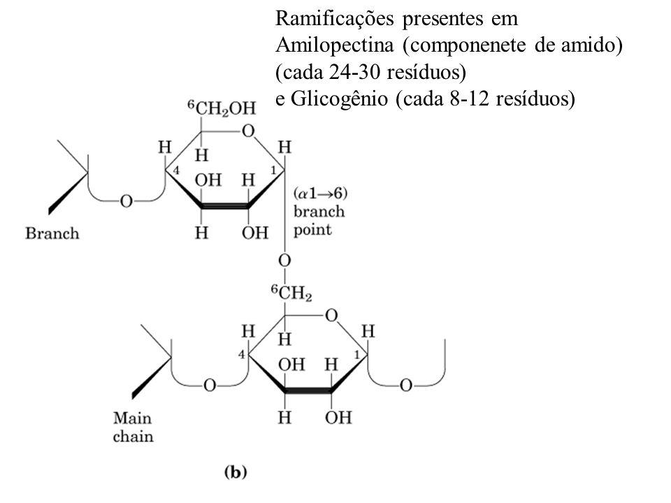 Ramificações presentes em Amilopectina (componenete de amido) (cada 24-30 resíduos) e Glicogênio (cada 8-12 resíduos)