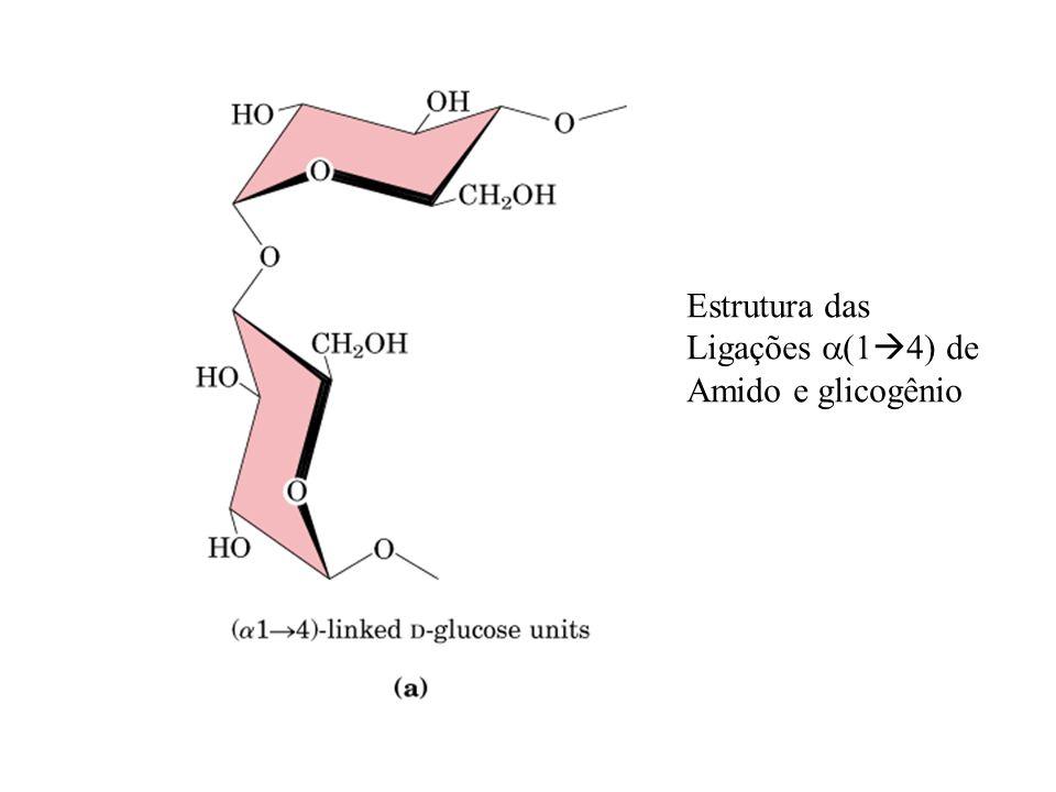 Estrutura das Ligações (1 4) de Amido e glicogênio