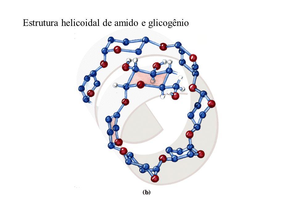 Estrutura helicoidal de amido e glicogênio