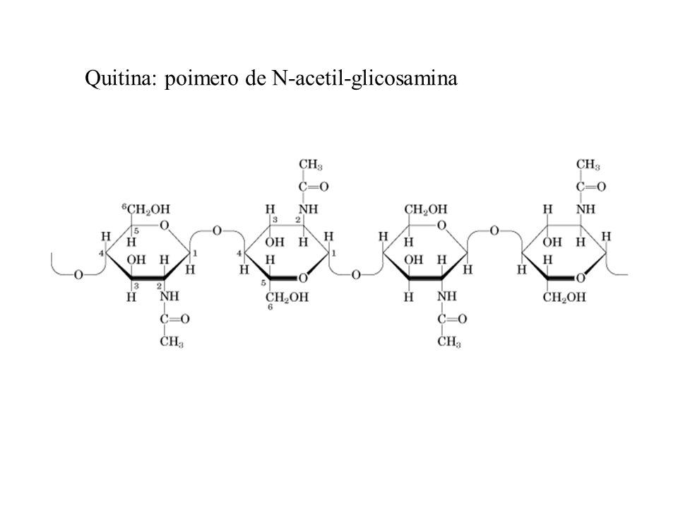 Quitina: poimero de N-acetil-glicosamina