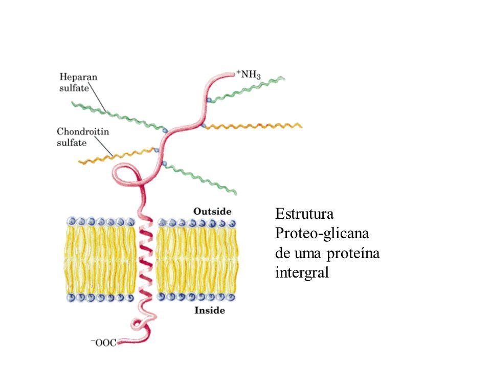 Estrutura Proteo-glicana de uma proteína intergral