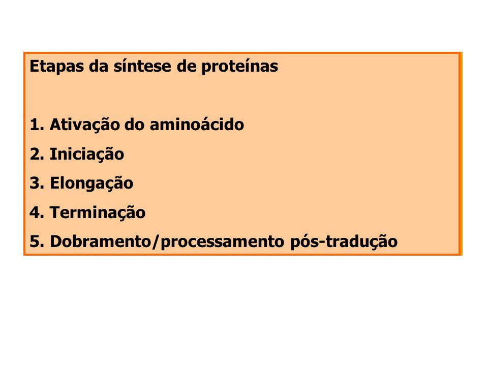 Etapas da síntese de proteínas 1. Ativação do aminoácido 2. Iniciação 3. Elongação 4. Terminação 5. Dobramento/processamento pós-tradução Etapas da sí