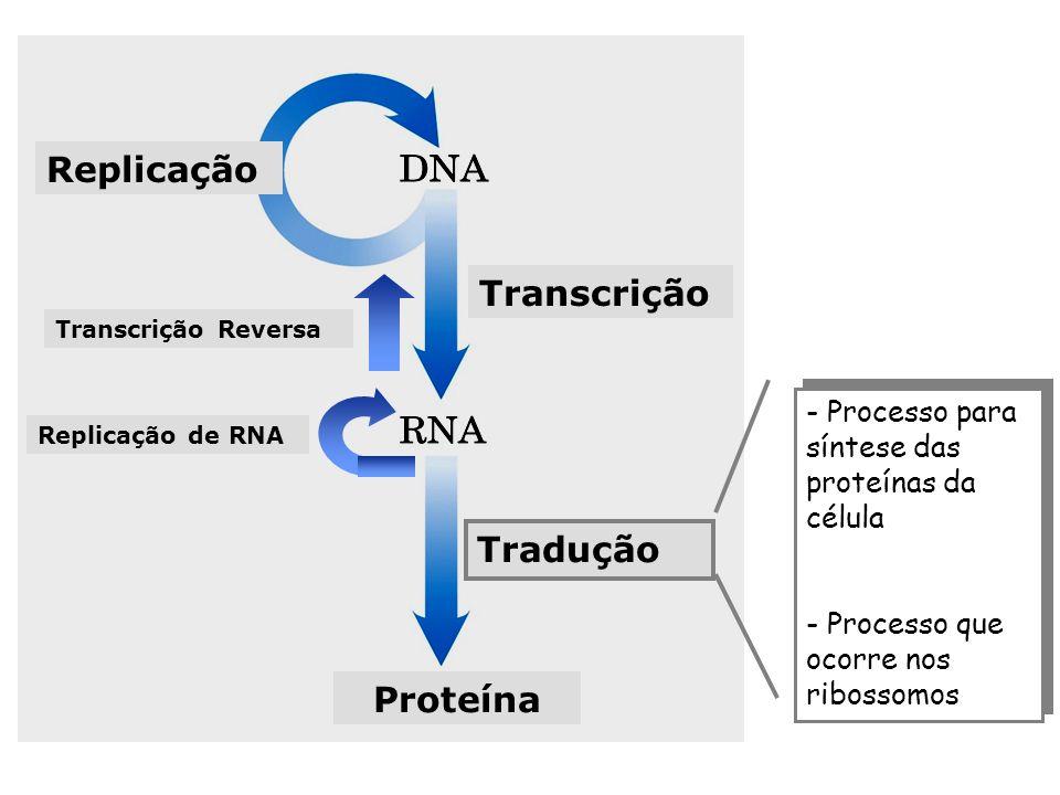 Replicação Transcrição Tradução Proteína - Processo para síntese das proteínas da célula - Processo que ocorre nos ribossomos - Processo para síntese