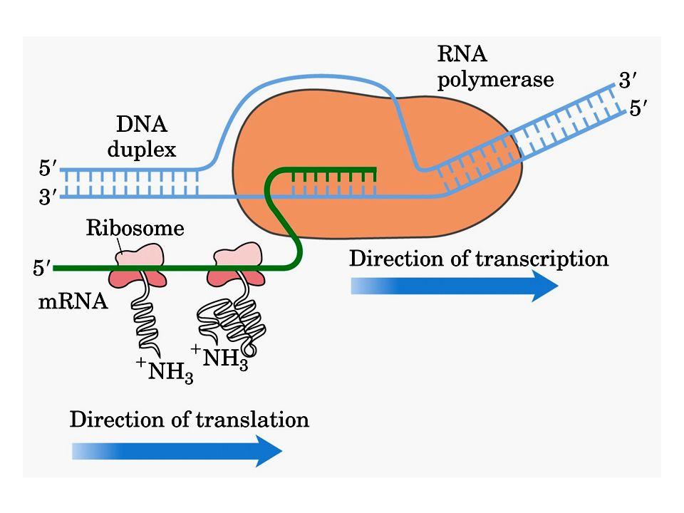 Nuclear localization sequence (NLS) direciona proteínas para o núcleo
