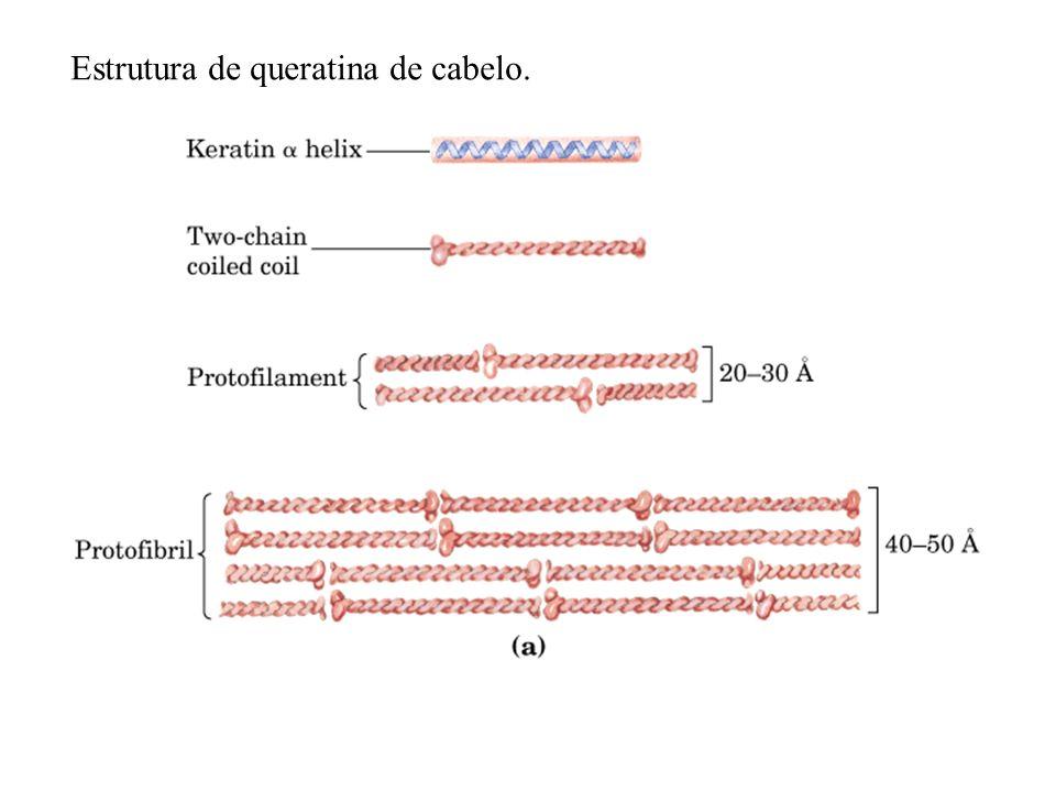 Estrutura de queratina de cabelo.