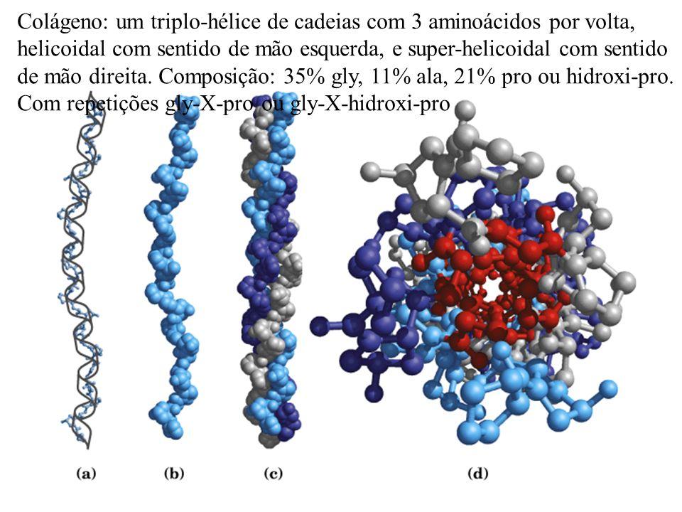 Colágeno: um triplo-hélice de cadeias com 3 aminoácidos por volta, helicoidal com sentido de mão esquerda, e super-helicoidal com sentido de mão direita.