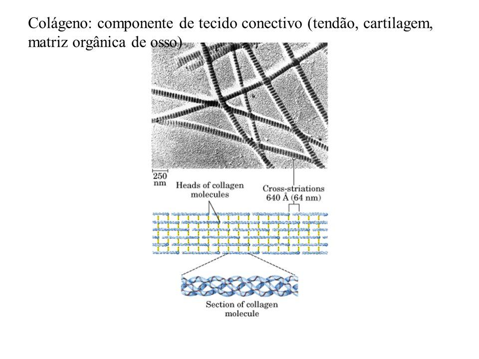 Colágeno: componente de tecido conectivo (tendão, cartilagem, matriz orgânica de osso)