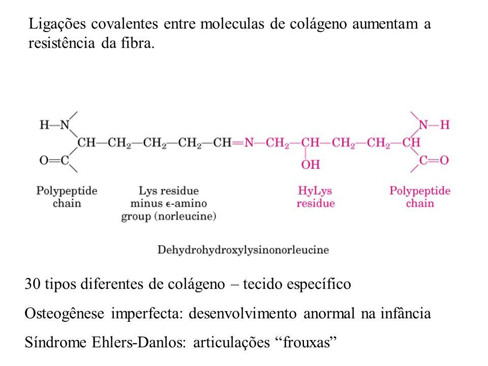 Ligações covalentes entre moleculas de colágeno aumentam a resistência da fibra.