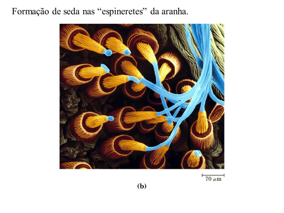 Formação de seda nas espineretes da aranha.