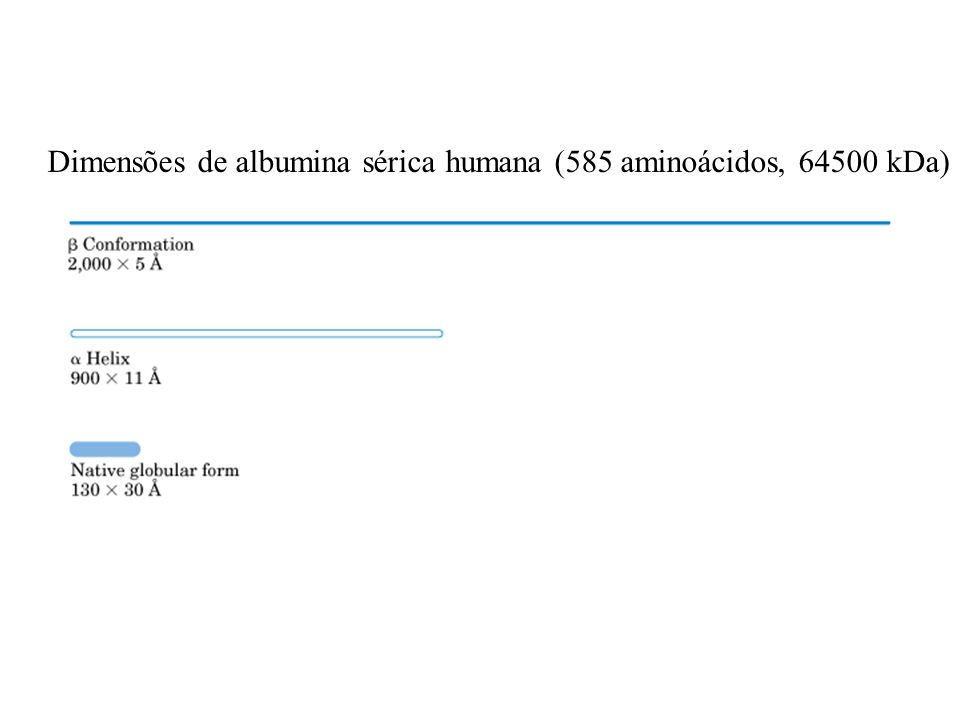 Dimensões de albumina sérica humana (585 aminoácidos, 64500 kDa)