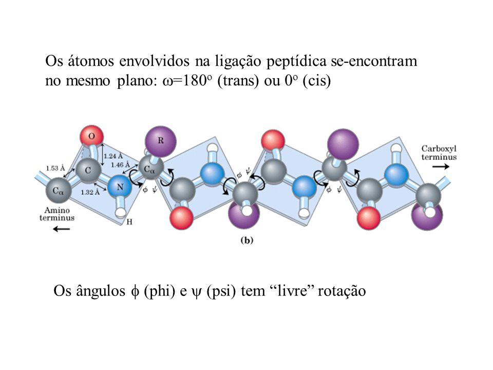 Os átomos envolvidos na ligação peptídica se-encontram no mesmo plano: =180 o (trans) ou 0 o (cis) Os ângulos (phi) e (psi) tem livre rotação