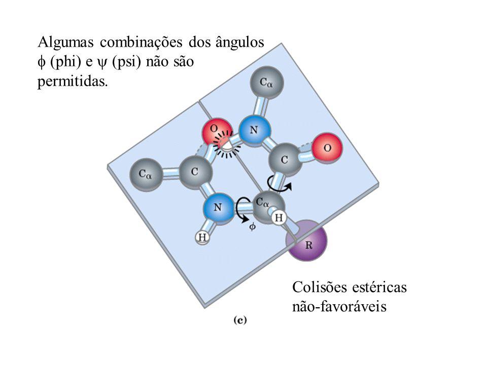 Colisões estéricas não-favoráveis Algumas combinações dos ângulos (phi) e (psi) não são permitidas.