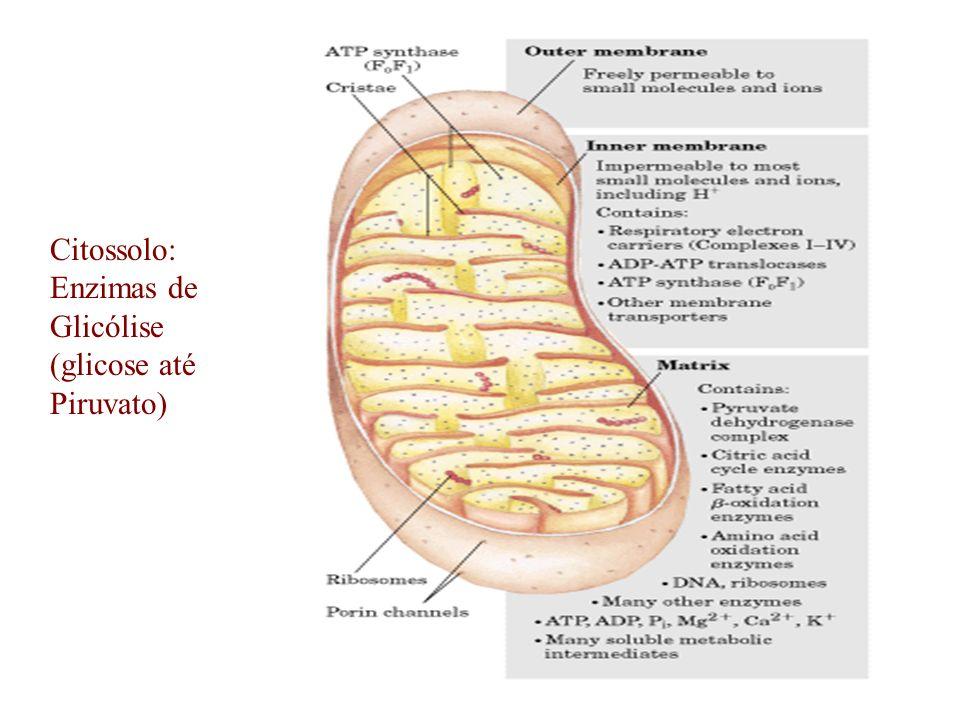 Citossolo: Enzimas de Glicólise (glicose até Piruvato)