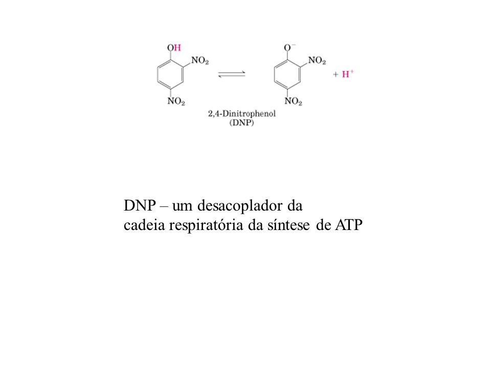 DNP – um desacoplador da cadeia respiratória da síntese de ATP