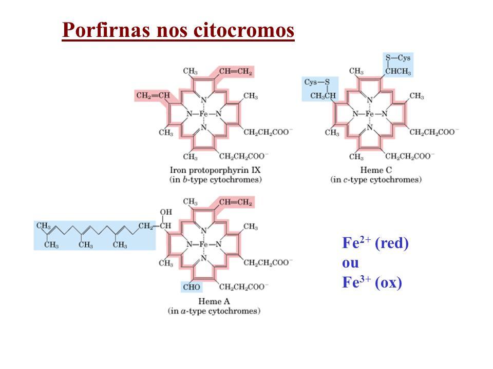 Porfirnas nos citocromos Fe 2+ (red) ou Fe 3+ (ox)