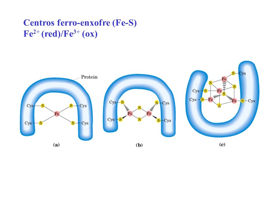 Centros ferro-enxofre (Fe-S) Fe 2+ (red)/Fe 3+ (ox)