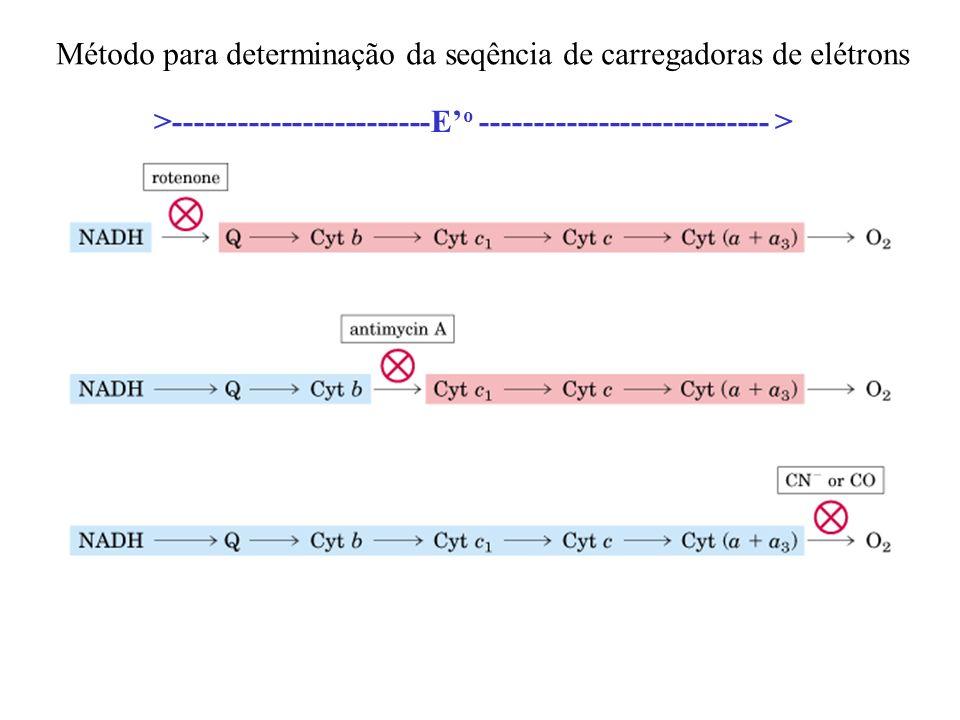Método para determinação da seqência de carregadoras de elétrons >------------------------E o --------------------------- >