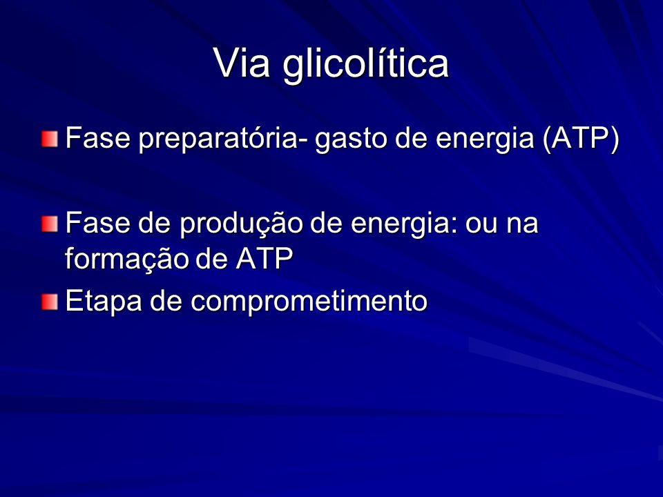 Via glicolítica Fase preparatória- gasto de energia (ATP) Fase de produção de energia: ou na formação de ATP Etapa de comprometimento
