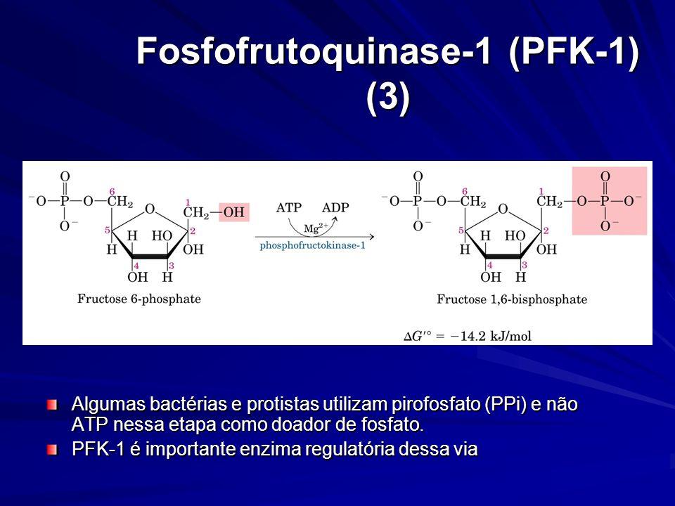 Fosfofrutoquinase-1 (PFK-1) (3) Algumas bactérias e protistas utilizam pirofosfato (PPi) e não ATP nessa etapa como doador de fosfato. PFK-1 é importa