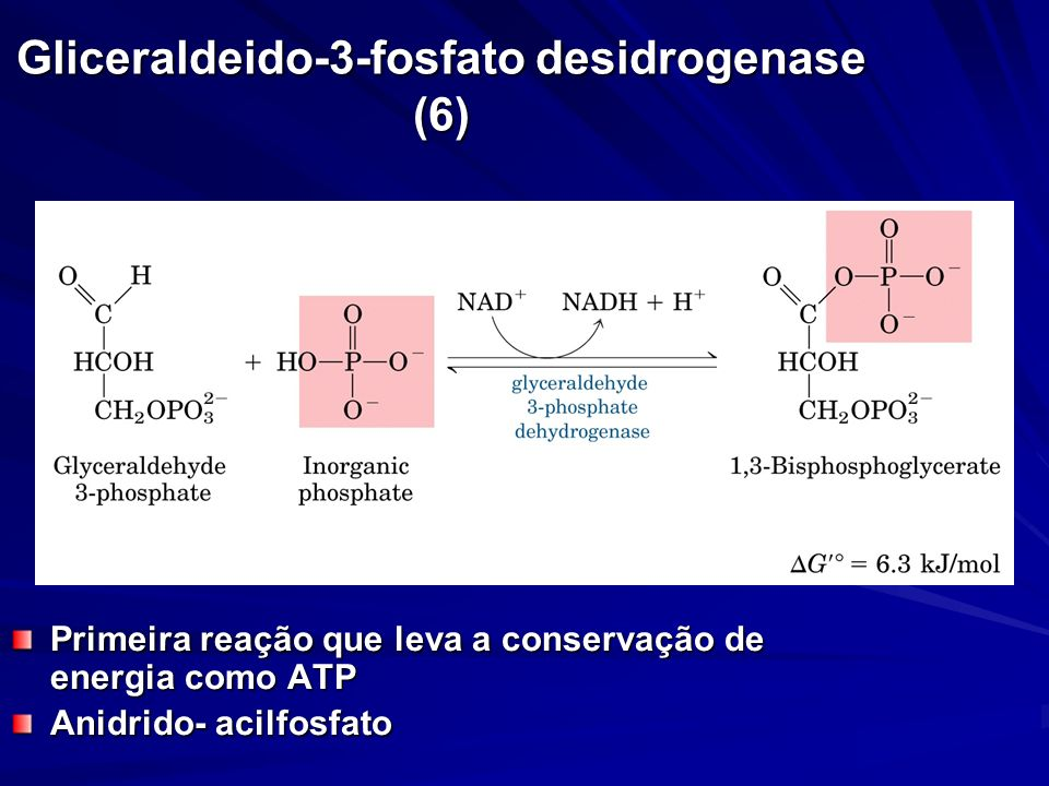 Gliceraldeido-3-fosfato desidrogenase (6) Primeira reação que leva a conservação de energia como ATP Anidrido- acilfosfato