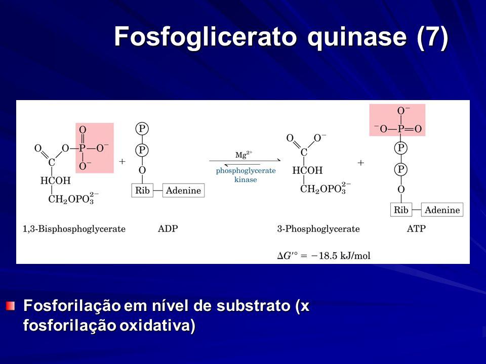 Fosfoglicerato quinase (7) Fosforilação em nível de substrato (x fosforilação oxidativa)
