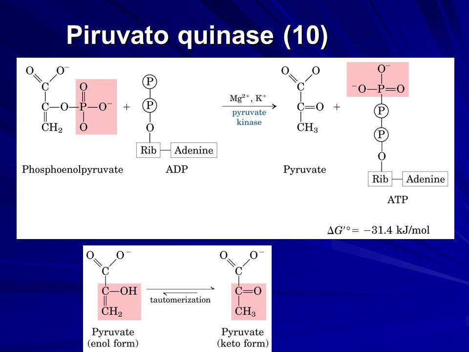 Piruvato quinase (10)