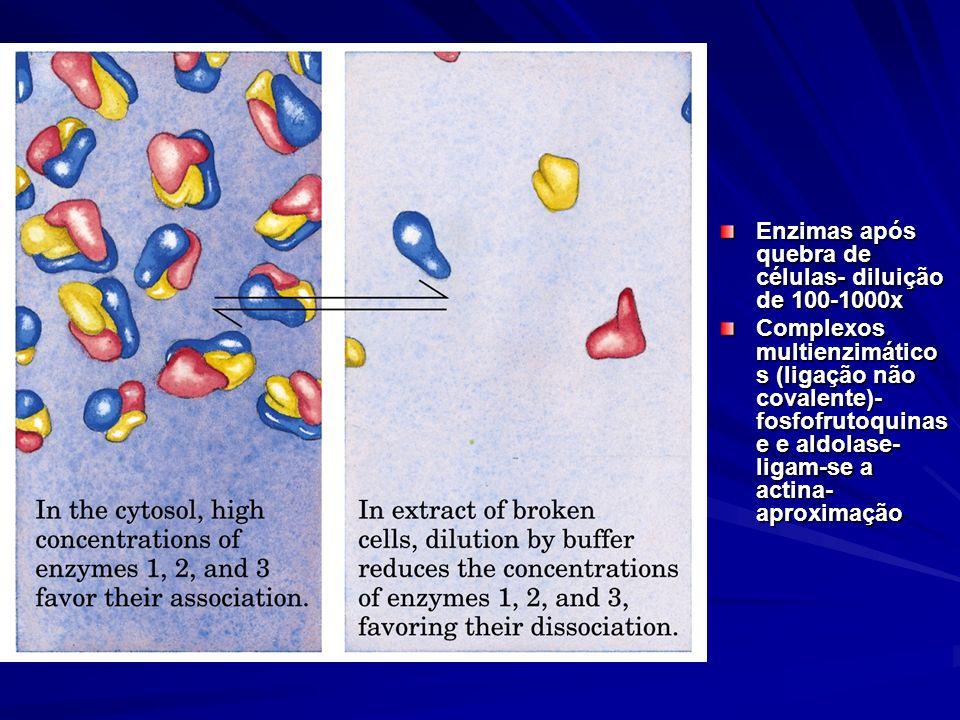 Enzimas após quebra de células- diluição de 100-1000x Complexos multienzimático s (ligação não covalente)- fosfofrutoquinas e e aldolase- ligam-se a a