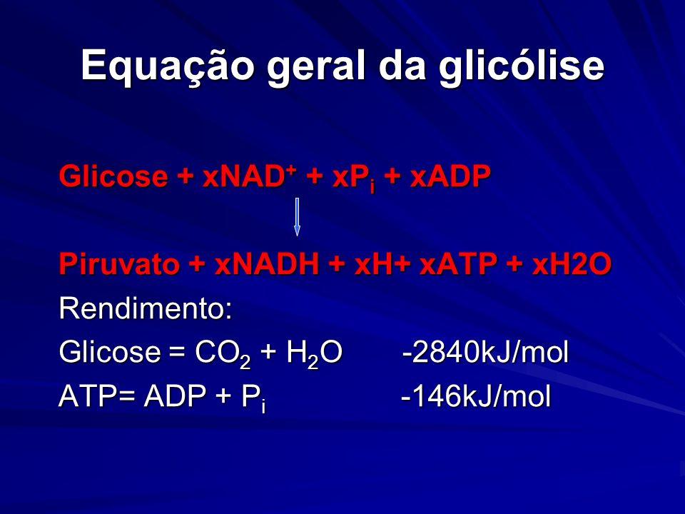 Equação geral da glicólise Glicose + xNAD + + xP i + xADP Piruvato + xNADH + xH+ xATP + xH2O Rendimento: Glicose = CO 2 + H 2 O -2840kJ/mol ATP= ADP +